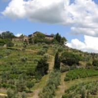 Gagliole Colli della Toscana Centrale IGT