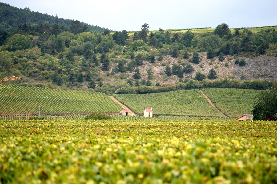 In Quebec, Canada, Bourgogne wines are booming!