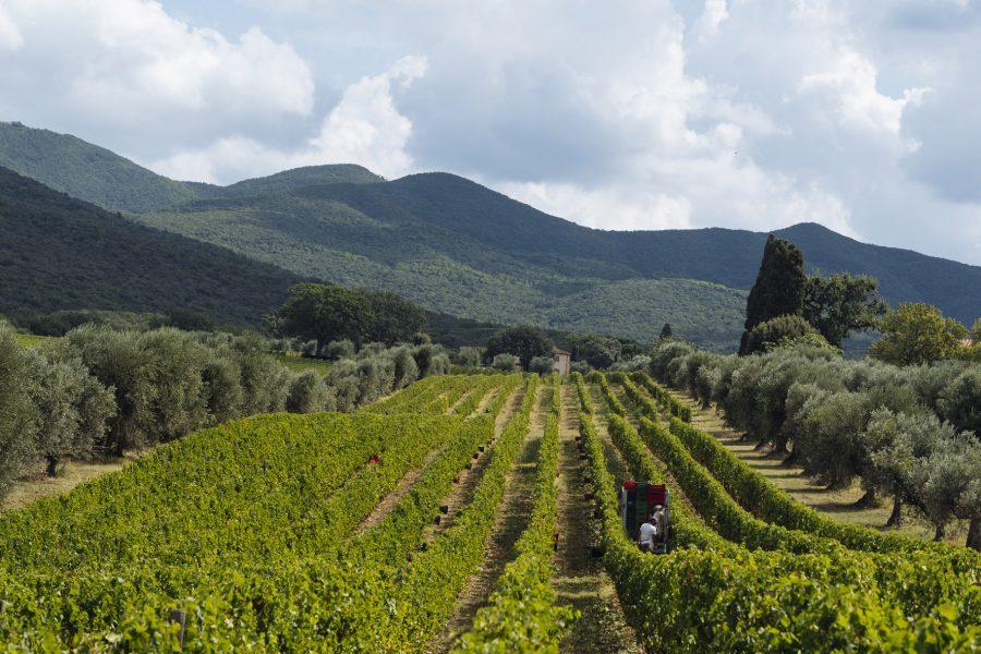 Le Serre Nuove dell'Ornellaia 2018: A classic wine from a classic vintage